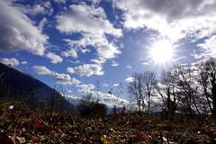 Sun - Treffort - France