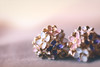 Less than an inch (victoriameyo) Tags: macromondays lessthananinch earrings flowers still life jewelry jewellery metal beauty