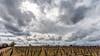 Storm (Rich Lonardo Photo) Tags: brentwood california ca storm clouds vineyards vines land landscape