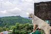 Jai Mata Di Trip ... (Bijanfotografy) Tags: nikon nikond500 nikondx dx nikon24mm28af nikonprime india jammukashmir jammu katra vaishnodevi hillyroad