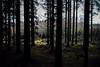 Häckeberga - Mot skogen - WEB (manuel ek) Tags: häckeberga naturområde forest nature woods trees hike vandring nikon sigma manuelekphoto akira hund dog perro pinscher