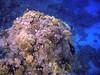 El Gouna, Egypt (Dream Vision Media) Tags: el gouna egypt diving underwater tropical red sea redsea egyptoctober2009 scuba olympus