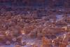 Sandstone Hoodoos In Goblin Valley State Park (Lee Rentz) Tags: april entradasandstone goblinvalley goblinvalleystatepark hanksville jurassic sanrafaeldesert sanrafaelswell alien america color early eroded erosion firstlight formation formations geologic geological geology glow goblins hoodoo hoodoos landscape light morning mushroomshaped natural nature northamerica orange park planet sandstone shape shapes southwest southwestern spring statepark strange sunrise us usa utah valley weathered weird wild
