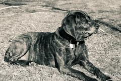 soak up the sun (dougmayer) Tags: macy dog