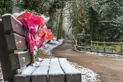 Memories of a loved one. (Photo_stream_this) Tags: rufford park nottinghamshire flowers bench snow