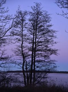 An der Schlei mit dem Sonnenuntergang im Rücken; Borgwedel (55a)