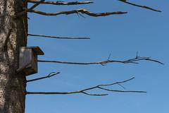 nesting box (meine.augenblicke) Tags: monschau deutschland nordrheinwestfalen eifelsteig urlaub nestingbox 2017 eifel nistkasten mützenich nestbox birdhouses kameranikond750