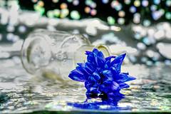 Schönes Wochenende! (ingrid eulenfan) Tags: stillleben stilllife glas kornblume 7dwf blau