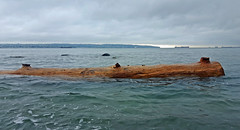 First Log of Autumn (HereInVancouver) Tags: log englishbay water pacific ocean vancouver bc canada floating autumn clouds ngc