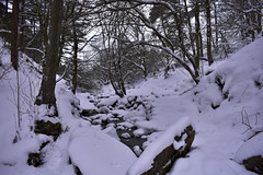 ogden river2 (mkcazackm) Tags: wind windy storm day ogden beast from east snow snowing harsh weather uk russia colder ice breeze nature red robin white black trees freezing water rivers deer wild