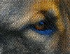 Tiny Mosaic Tiles (swong95765) Tags: dog eye mosaic tile art cute germanshepherd tiles