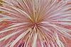Explosion (JDAMI) Tags: plante feuiles explosion nikon d600