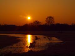 WINTER 2018 P1141347 (hans 1960) Tags: sunrise sun sonne sonnenaufgang sol soleil nature natur landschaft landscape trees wasser water farben colours himmel sky windmills windräder wiese
