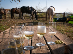 Horses and wine (Attilio Piano) Tags: horses wine spumante aperitivo glass