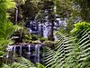 Mount Field Waterfalls 10 (Remko Tanis) Tags: australia field forest mount national nature park tasmania water waterfall