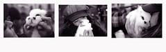 morbidezza (Maria Evgenidu) Tags: canoneos500n kodakfilms kodak kodakt400cn ravenna silvana bunny whitebunny expired film expiredfilm pellicola pellicolascaduta analogue analog analogico analogica analogphotography analogpassion thefilmexperience theanalogproject thefilmcommunity truegrain 35mm fotografiaanalogica filmisnotdead finchècèpellicolacèsperanza filmisawasteoftime staybrokeshootfilm beanalogic iscanbymyself sweetness sweet classicblackwhite bw bn biancoenero blackandwhite