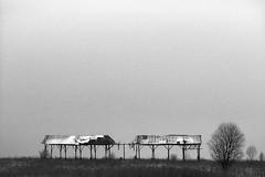 time does not stop (Dmitriy Ryabov) Tags: canoneos1v canon1v canon dmitriyryabov ef2470mmf28liiusm 2470 bw monochrome blackandwhite photo photography landscape field tree minimalism kodaktmax400pro