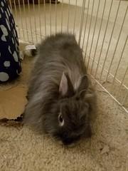 Max (Pinky Earl) Tags: rabbit bunny bun lapin conejo usagi