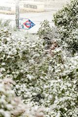 Nieve en Barajas (Eduardo Sampedro) Tags: barajas copodenieve fuji fujix fujifilmxt1 madrid metro naturalezaurbana nevando nieve parqueurbano snow snowflake snowing xt1