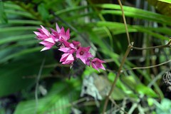 WOL Calauan Laguna Philippines Day 1 (126) (Beadmanhere) Tags: philippines flowers