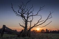 Rural Sunset (*Photofreaks*) Tags: rural sunset mã¼lheim ruhr germany sonnenuntergang lã¤ndlich landschaft landscape deutschland ruhrgebiet tree baum leafless blattlos winter felder flields adengs wwwphotofreakseu mülheim ländlich