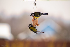 That is mine.... (sahar19715) Tags: day sony birds winter snow nature beauty
