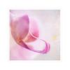 Happy Weekend (BirgittaSjostedt) Tags: flower soft single alone texture pastel pink paint unique art beauty closeup birgittasjostedt