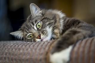 Mmmm... Catnip!
