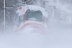 Whiteout (Teruhide Tomori) Tags: 秋田県 秋田市 奥羽本線 日本 東北 秋田新幹線 こまち e6系 高速鉄道 ミニ新幹線 電車 列車 鉄道 railway railroad train japon japan tohoku akita superexpress bullettrain komachi e6series akitashinkansen winter snow 雪 red snowstorm blizzard 暴風雪 雪嵐 新幹線 shinkansen