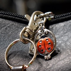 hold me tight (ladybugdiscovery) Tags: macromonday fasteners ladybug