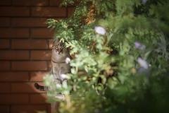 Minja (Katarina Drezga) Tags: cats cat catphotography petphotography pets nikond750 tamron70200vcg2 domesticcat feline felines