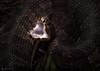 Warning Flash (Daniel R. Wakefield) Tags: florida cottonmouth snake wildlife reptile animal creature creation defensive display mouth white night black dark natgeo nikon photography macro fangs venomous venom danger