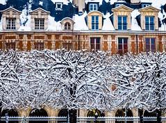 SnowTrees.jpg (Klaus Ressmann) Tags: klaus ressmann omd em1 fparis france facade placedevoges snow winter cityscape flccity trees klausressmann omdem1