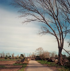 winter walk (davidgarciadorado) Tags: winter tree walk 6x6 film mediumformat rolleiflex planar 120