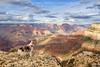 Grand Canyon Adventure (adventuredogphoto) Tags: dog landscape dogphotographer dogphotography beyondthefence adventuredogphotography adventuredog australianshepherd aussie redmerle grandcanyon grandcanyonnationalpark canyon