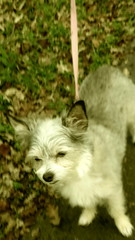 IMG_9058 (earthdog) Tags: 2018 dog pet animal liveanimal needstags needstitle canon canonpowershotsx720hs powershot sx720hs