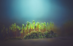 Light on Moss (Dhina A) Tags: sony a7rii ilce7rm2 a7r2 kodak ektanar c 102mm f28 projection projector lens kodakektanar102mmf28 vintage bokeh smooth soft bubble moss light