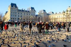 IMG_0274PARIS  PARVIS NOTRE DAME;,  TOURISTES  ET  PIGEONS (closier.christophe) Tags: paris notredame touristes pigeons christopheclosierphotos iledelacité parvisnotredame