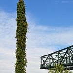 Duisburg - »Landschaftspark Nord« - ehemaliges August-Thyssen-Hüttenwerk (149) thumbnail
