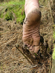 New growth (Barefoot Adventurer) Tags: barefoot barefooting barefoothiking barefeet barefooter barefooted baresoles barfuss blacksoles earthsoles earthing earth earthstainedsoles energy healthyfeet texture leathersoles anklet soles strongfeet stainedsoles forest flexiblefeet footmassage wrinkledsoles woodland walking leathertoughsoles livingleather leather toughsoles toes happyfeet hardsoles naturalsoles naturallytough