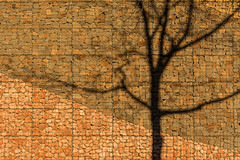 Shadow of a tree (Jan van der Wolf) Tags: map180115v schaduw shadow shadowplay tree boom lines lijnenspel interplayoflines stones wall muur