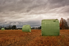 Hay Bales Wrapped In Plastic On The Autumn Fields (k009034) Tags: 500px autumn trees sky nature clouds fall colors fields countryside weather agriculture plastic rural hay roll telephone line farming harvest dramatic seasons wrap bale finland scandinavia oulainen matkaniva teamcanon