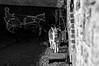Being Taken For A Ride (NVOXVII) Tags: donkey stable yard bnw blackandwhite monochrome portrait animal clovelly devon nikon lightandshadow contrast