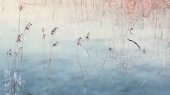 un sogno (Rosmarie Voegtli) Tags: ermitage arlesheim kraftort specialplace pond water winter unsogno traum dream rêve sweetdream 118picturesin2018 43 lostinthought