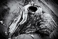 The Last Unicorn (EssGee Photography™) Tags: nikon1855vr nikond40 wood weathered travel tourist slr shore sand rockaway gatewaynationalrecreationarea digital decay beach art newyork ny riispark blackandwhite bw unicorn monochrome