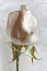 Flower in ice #10 / 25.02.2018 (mksystem) Tags: green