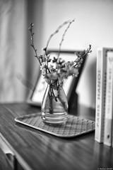 Paris Hanoï (Mathieu HENON) Tags: leica m240 noctilux 50mm noirblanc nb blackwhite monochrome stilllife naturemorte bouquet vase