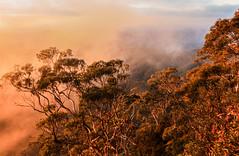 ..the morning kiss.. (dawn.tranter) Tags: dawntranter nationalpark armidale australia morningkiss sunlight sunrise mountains mist