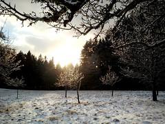 Winter (Antje_Neufing) Tags: winter farschweiler rheinlandpfalz wald schnee sonne