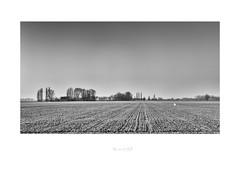 winter in the polder (robvanderwaal) Tags: landscape landschap voorne voorneputten nederland netherlands winter boom bomen polder mono monochrome blackandwhite bw zw zwartwit robvanderwaalphotographycom black white